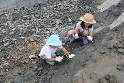 瑞浪市での化石掘り